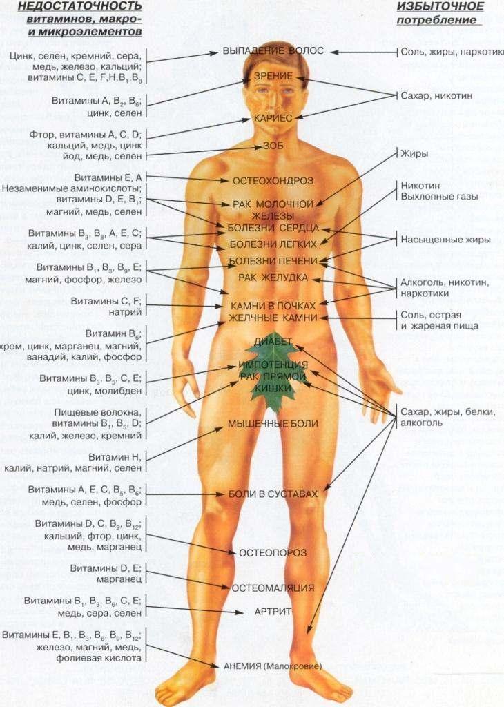 Подробнее о витаминах