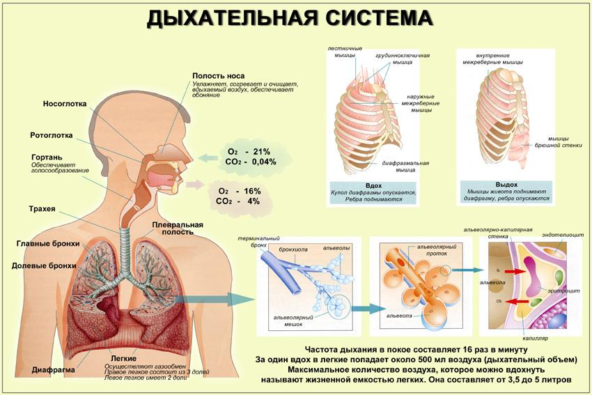 Метод лечения гипертонии Месника Н.Г.
